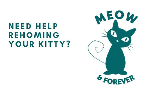 Need help rehoming your kitty? Meow & Forever