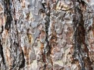 pattern on bark
