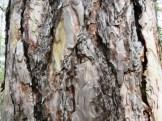 pattern in bark