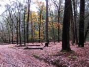 Oaks on the La Gerche Trail