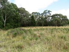 remnant bushland