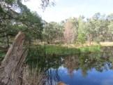 roadside dam