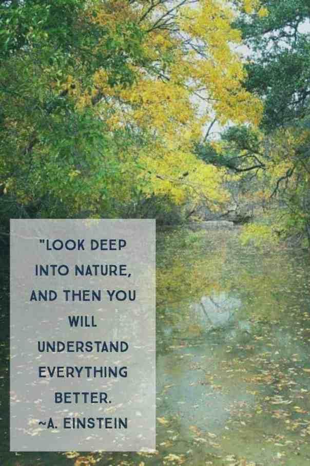 Understanding in Nature Einstein Quote