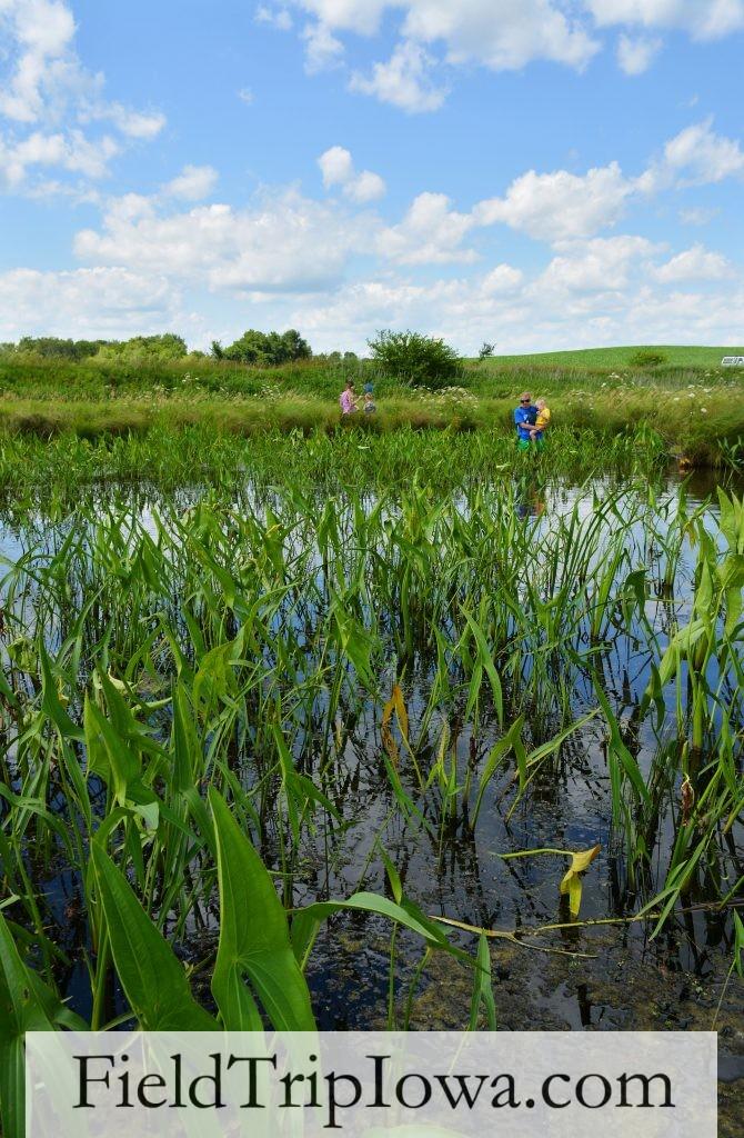Iowa Marsh