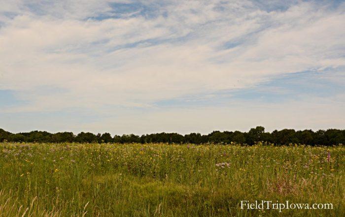 Ledges State Park meadow