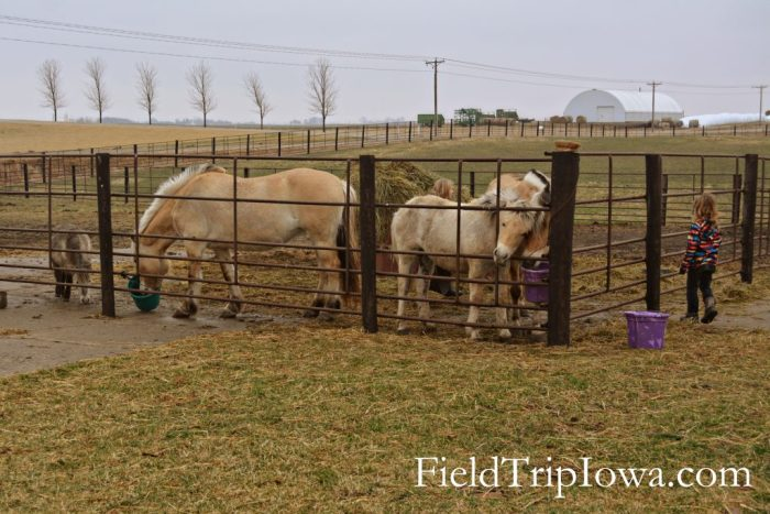visit an iowa farm to help with chores