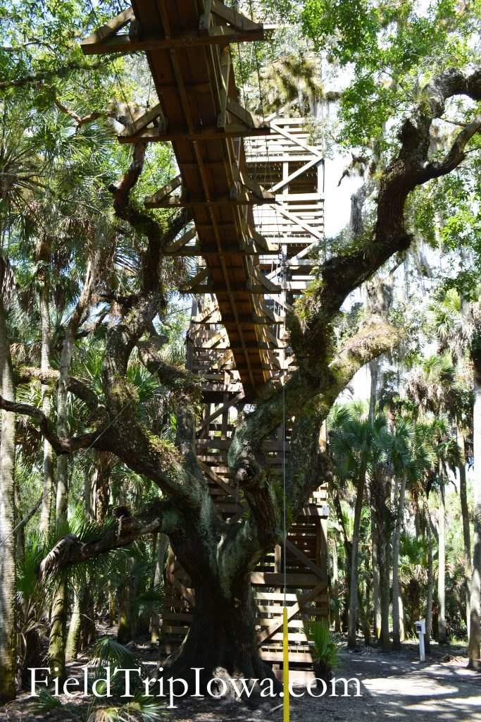 The underside of the Canopy Walkway at Myakka River State Park in Florida.