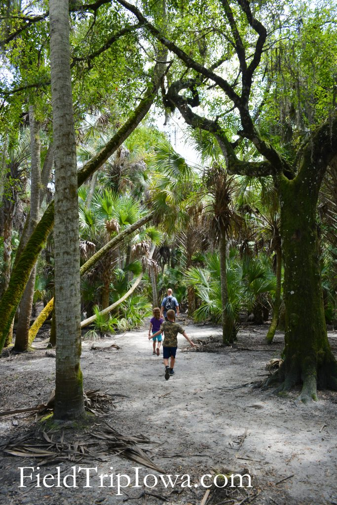 A family walking on the Nature Trail at Myakka River State Park in Florida.