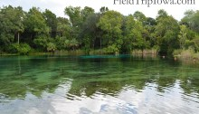 Deep blue color is where spring is located at Ocala National Forest Alexander Springs Timucuan Indian Nature Trail