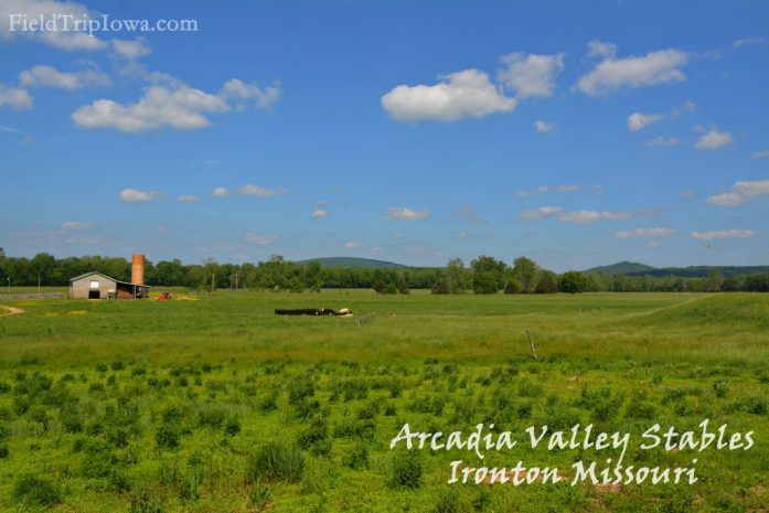 Cows in a pasture at Arcadia Valley Stables by Plain & Fancy BB.