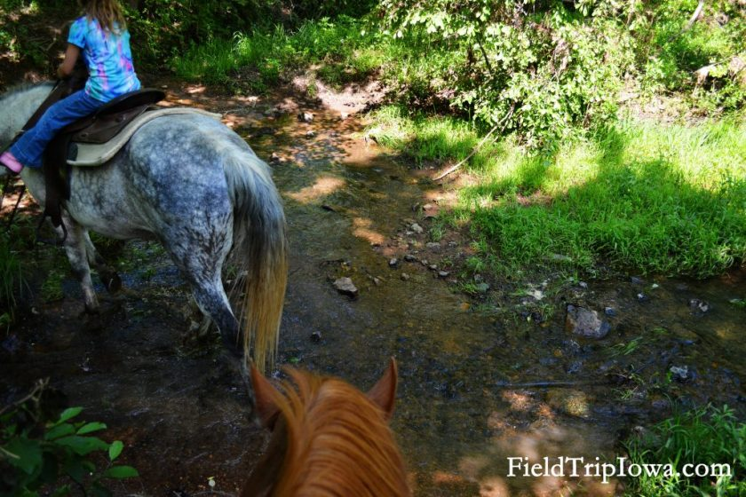 Horses walk throught a stream at Arcadia Valley Stables by Plain & Fancy BB.