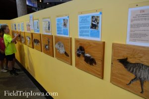 A museum wall with animal furs that kids can touch in Neal Smith National Wildlife Refuge Visitor Center