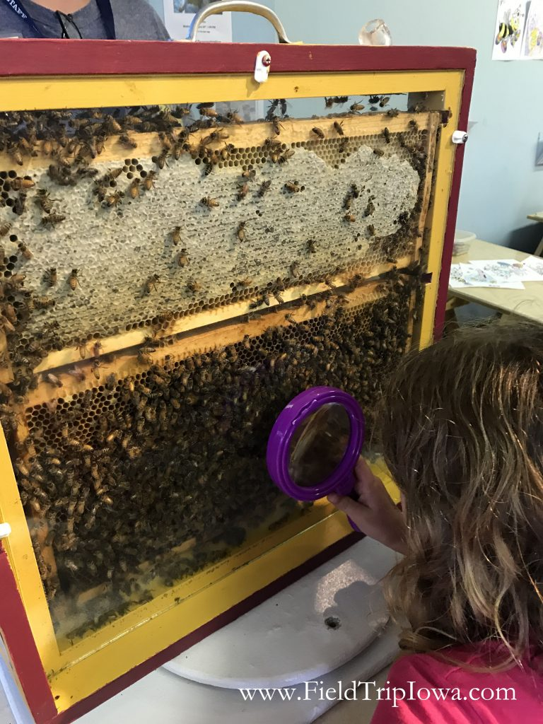 Little girl looks at bees at Minnesota State Fair