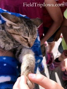 Kitten in child's arms at Picket Fence Creamery