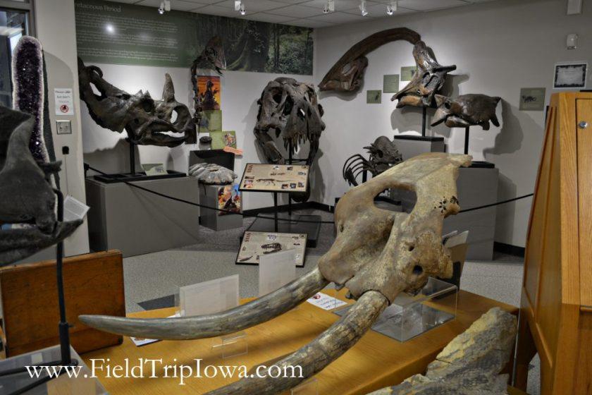 Bones on display at Fryxell Geology Museum