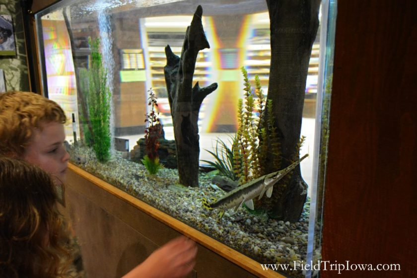 Fish in tank at museum in Starved Rock State Park, IL