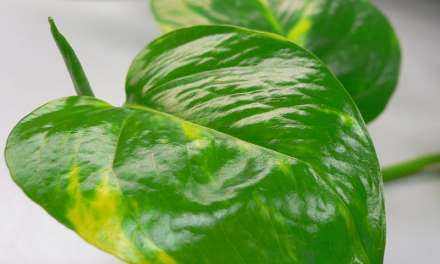 Fierce Fridays: Color Your Life Green — Even If You're a Plant Assassin