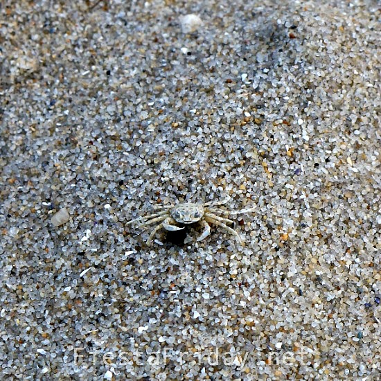 camouflaged-crab-on-the-beach-2