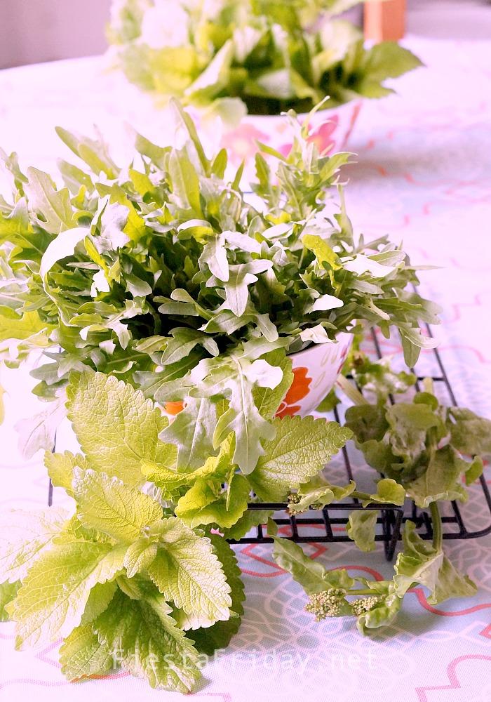 Perennial Arugula (Diplotaxis Tenuifolia) | FiestaFriday.net
