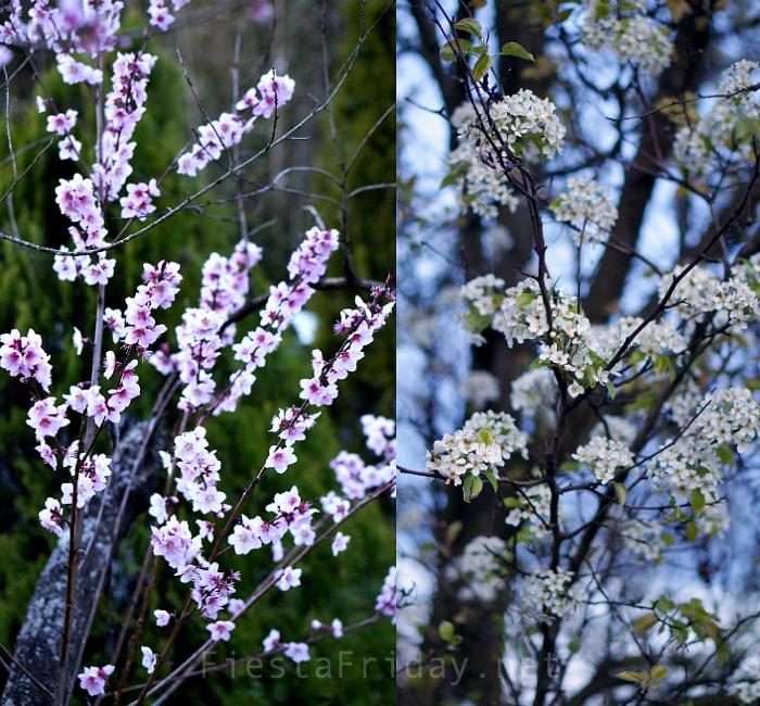Flowering Trees | FiestaFriday.net