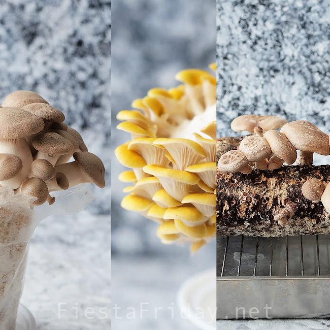 Trumpet Oyster, Golden Oyster, and Shiitake Mushroom Growing Kits | FiestaFriday.net