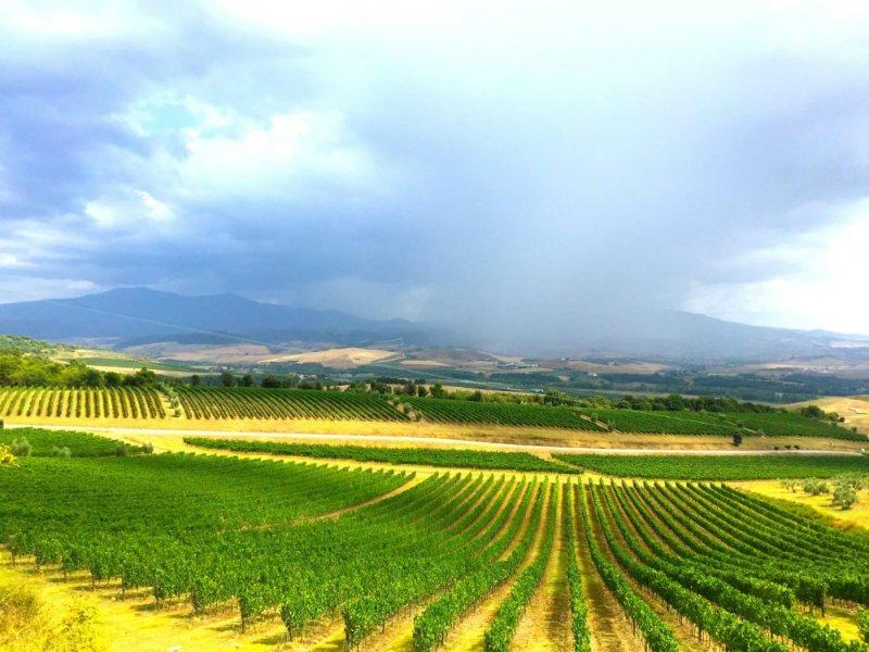 View of the vineyards at Tuscan winery Banfi