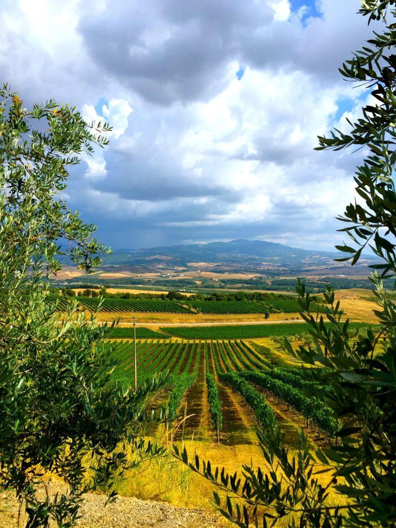 A tour of Tuscan winery Banfi