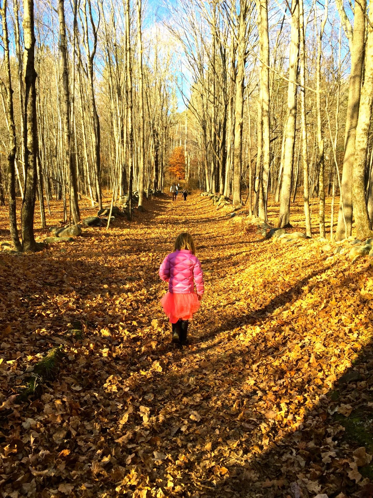 Ward Pound Ridge Reservation: Westchester's Largest Park