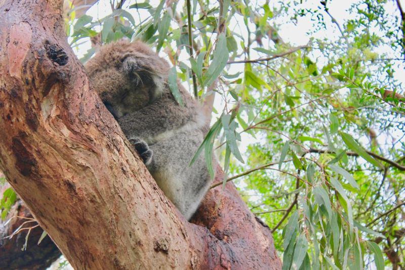 Exploring the Kola Conservation in Phillip Island Australia.