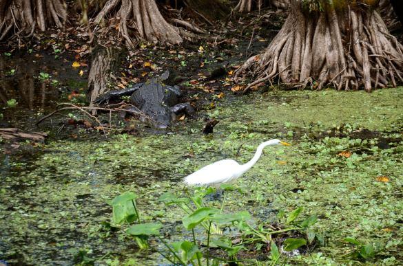 Corkscrew Swamp Sanctuary in Naples Florida.