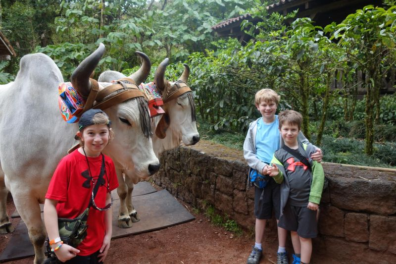Travel Exchange - Hanging with animals in Costa Rica.