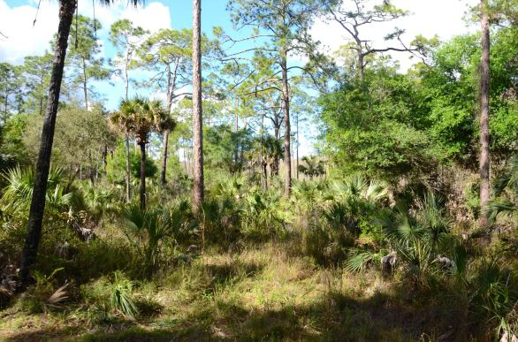 Corkscrew Swamp Sanctuary in Naples Florida