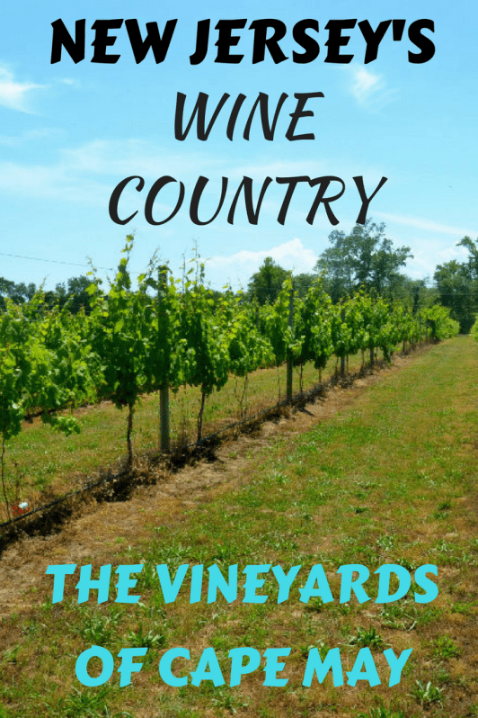 The wine vineyards of Cape May, New Jersey are fast becoming a popular local and tourist destination.