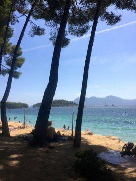 Formentor-beach-Mallorca-pine-trees-