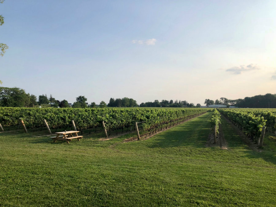 A visit to Two Sisters wine vineyard in Niagara-on-the-Lake