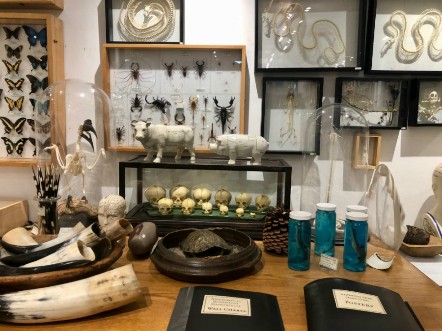 Things to do in Greenwich Village in the winter with kids, the Evolution Store