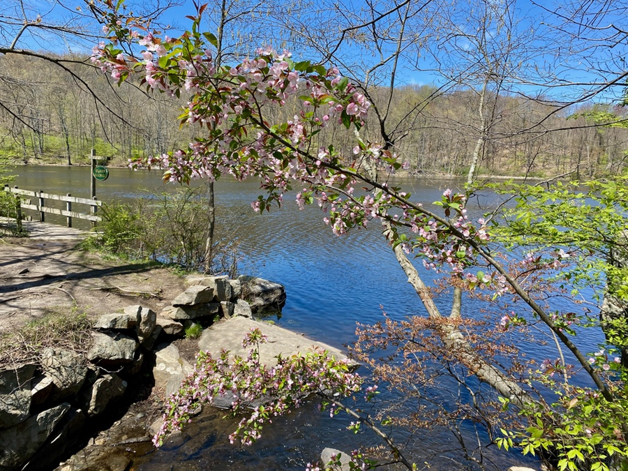 Teatown Lake preservation in Ossining, Westchester, dog-friendly-trail