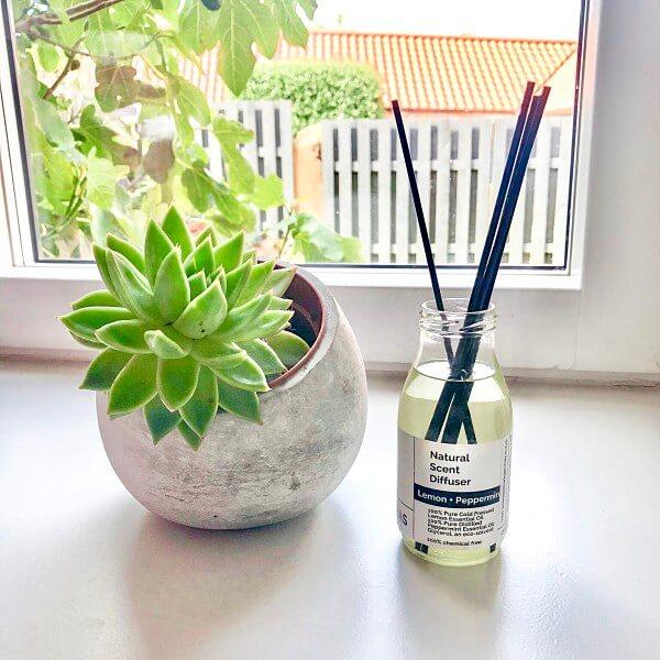 succulent plant home diffuser