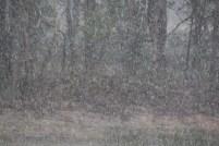 Raindrops 05