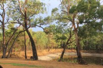 Landscape: After the rain