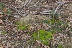 Moss and bark.