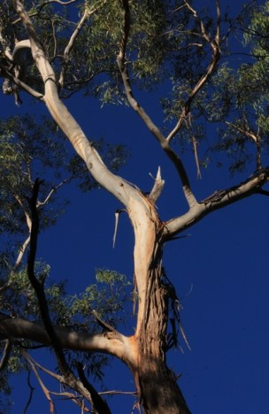 Brilliant-blue-sky-with-white-branch