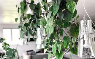 grønne planter