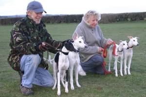Mum, Dad and the pups