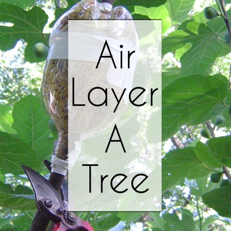 Air Layer A Tree Home button