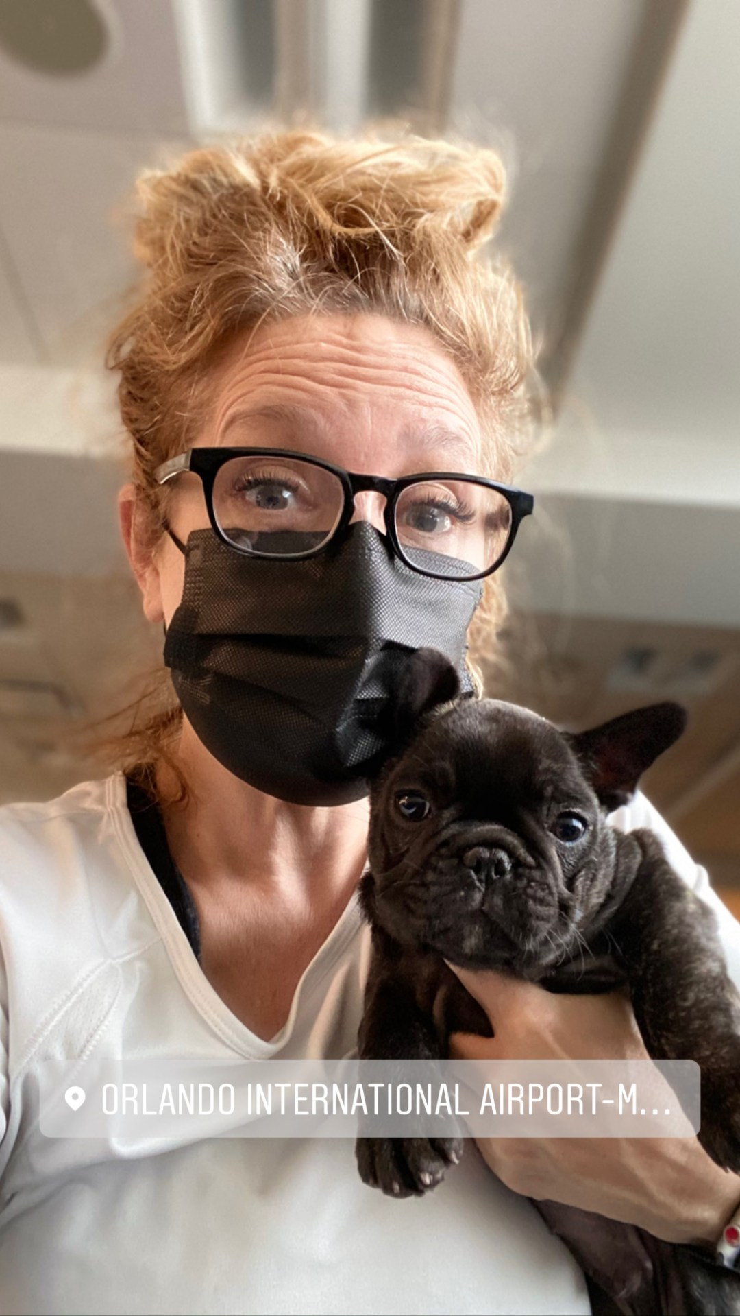 Flight Pet Nanny transporting a french bulldog puppy