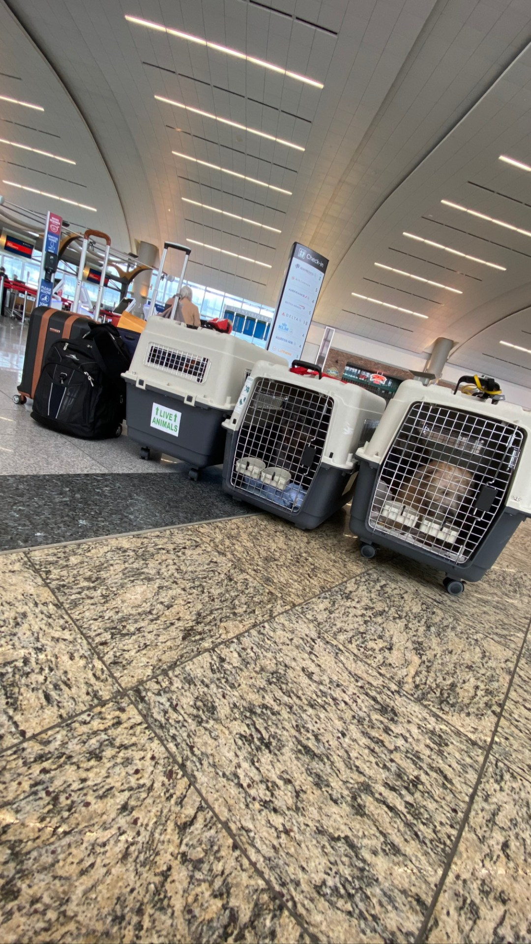 Flight Pet Nanny transporting glen of imaals from the united states to the netherlands