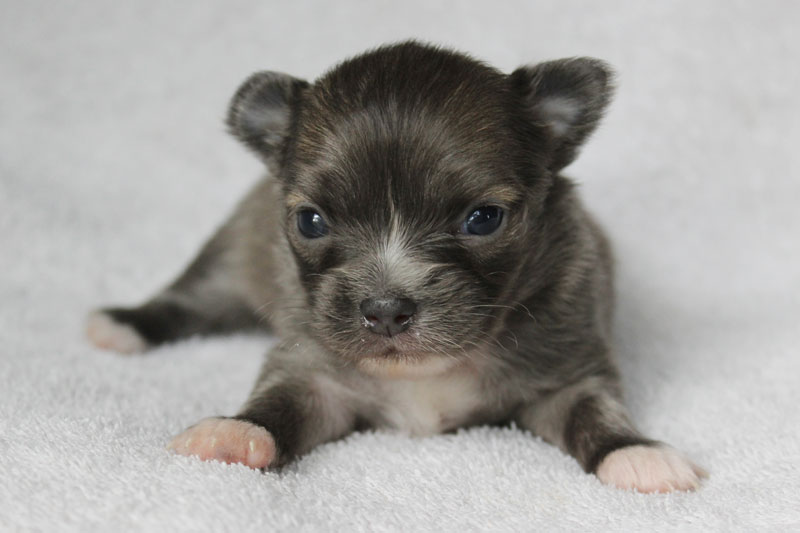 Stoli - 3 Weeks Old – Weight 1 lb 3/4 oz