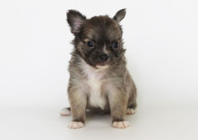 Stoli - 5 Weeks Old – Weight 1 lb 10 1/4 ozs