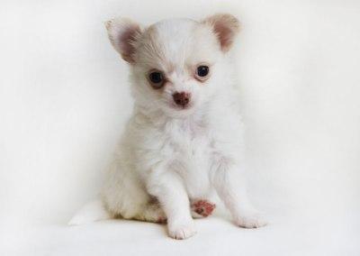 Rudy - 6 Weeks Old – Weight 1 lb 4.1 oz